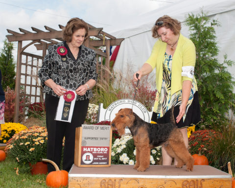Award Of Merit:  GCH Darwyn's I'm Not Arguing That.  Owner/Breeder: Larisa Hotchin