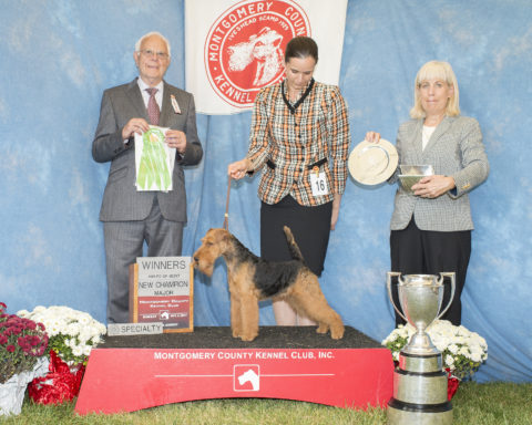 Winners Bitch/Award Of Merit:  Monaline Laggon Lee.  Owner/Breeder: Vladimir Pijunovic