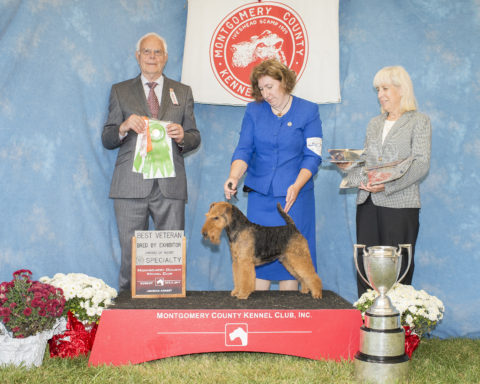 Best Veteran/Best Bred By Exhibitor/Award Of Merit:  GCH Darwyn's I'm Not Arguing That.  Owner/Breeder: Larisa Hotchin