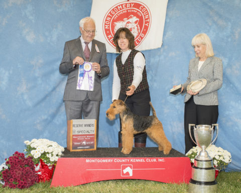 Reserve Winners Dog:  Brightluck's Dash To Pirate's Honor.  Owners: Janet McBrien & Lee Ann Partridge.  Breeder: Janet McBrien