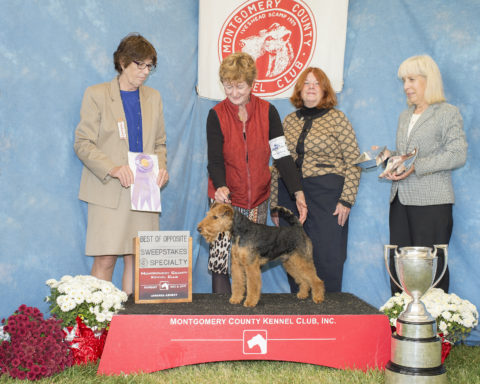 "Best of Opposite in Sweepstakes:  Seaplume's Cooper At Tailwinds.  By GCH Abbeyrose New Kid At Esty Glen SE - Ch Seaplume's Spot On. Owners:  Linda Murray & Caryn Stevens.  Breeders:  Matt O""Farrell & Caryn Stevens"
