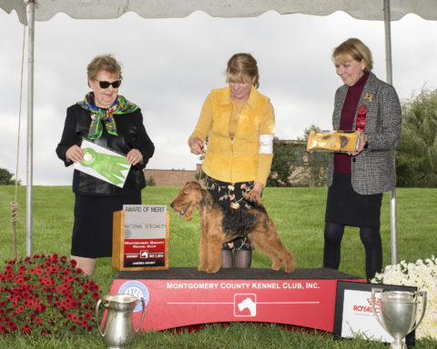 Award of Merit: CH Malvado Mucho Dinero. Owners: Janet Fox Stephens & Patricia Clark.  Breeders: Norman Clark & Patricia Clark