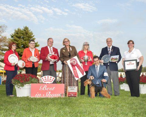 Best In Show: GCH Abbeyrose Captain Jack.  Owners: Mary Duafala, Pamela Allen, Judith Anspach & Janice K. Simmons.  Breeders: Mary Duafala, Pamela Allen & Judith Anspach.