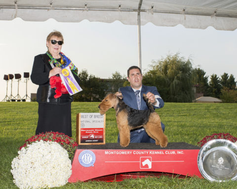 Best of Breed/BIS: GCH Abbeyrose Captain Jack.  Owners: Mary Duafala, Pamela Allen, Judith Anspach &  Janice K. Simmons.  Breeders: Mary Duafala, Pamela Allen & Judith Anspach.