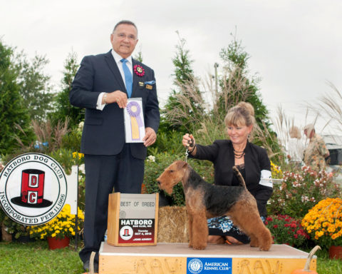 Best of Breed/G4: GCH Brightluck Money Talks.  Owners: Keith Bailey & Janet McBrien.  Breeder: Janet McBrien
