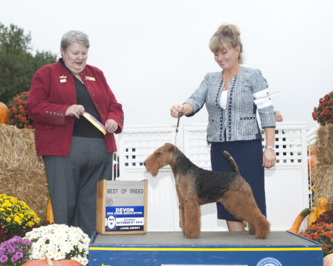 Best of Breed/G2:  GCH Money Talks.  Owners: Keith Bailey & Janet McBrien.  Breeder: Janet McBrien