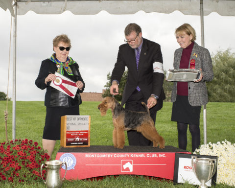 Best of Opposite: CH Shiloh Morning's Touching Heaven.  Owners: Terry Lohmuller & Cathy Francis.  Breeder: Cathy Francis.