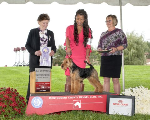 Best of Opposite in Sweepstakes: Dragonfox A Win Wynn Situation.  Owners:  Geri Mendes & Kim Long.  Breeders: Geri Mendes & Kathy Rost