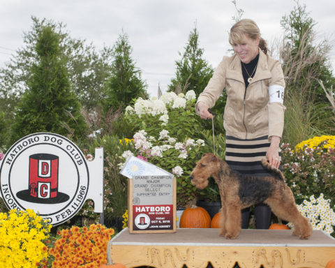 Select Bitch: CH Malvado Mucho Dinero.  Owners: Janet Fox Stephens & Patricia Clark.  Breeders: Norman Clark & Patricia Clark