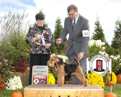 Winners Dog: Shiloh Morning's & Teritails Deacon.  Owners: Terry Lohmuller & Cathy Francis.  Breeder: Cathy Francis