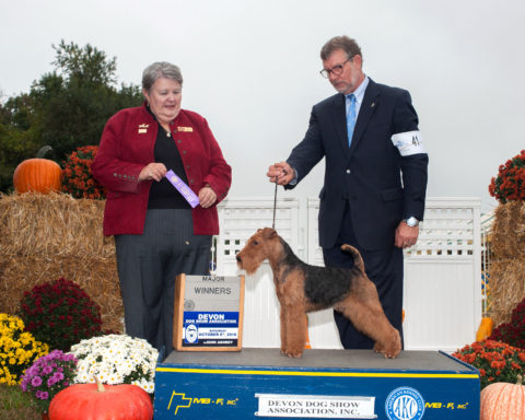 Winners Dog: Shiloh Morning & Teritails Preacher Man.  Owners: Terry Lohmuller & Cathy Francis.  Breeder: Cathy Francis