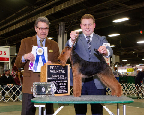 Winners Bitch/ Best Of Winners: Brynmawr Night Sprite.  Owners: Kathy McAtamney and Kathy Rost .  Breeders: Kathy Rost and Jean Callens