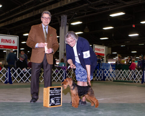 Best Bred By Exhibitor: Brynmawr Sweet Dreams.  Owners: Kathy Rost and Jean Callens.  Breeders: Kathy Rost and Jean Callens