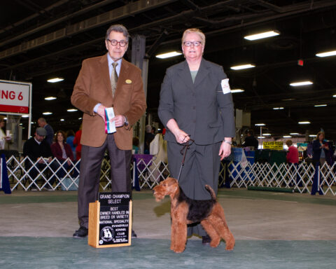 Select Bitch/ Best Of Breed Owner Handled: CH Bridgemôr's Pot Of Gold.  Owners: Mary Ellen Carney and Claire Alasio.  Breeders: Mary Ellen Carney and Claire Alasio.