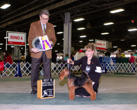 Best of Breed/ Group 4: GCH Brightluck Money Talks.  Owners: Keith Bailey and Janet McBrien.  Breeder: Janet McBrien
