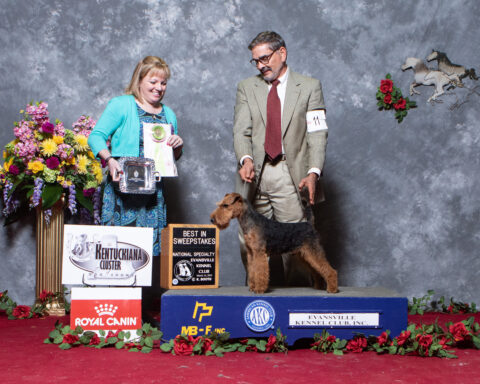Best In Sweepstakes: Redragon's Eye Of The Tiger.  Owners: Fred Adams and patricia Adams.  Breeders: Fred Adams and Patricia Adams