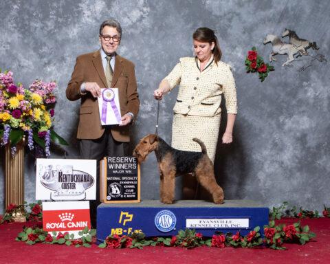 Reserve Winners Dog: Seaplume's Easy To Spot.  Owners: Caryn Stevens and Matt O'Farrell.  Breeders: Caryn Stevens and Matt O'Farrell