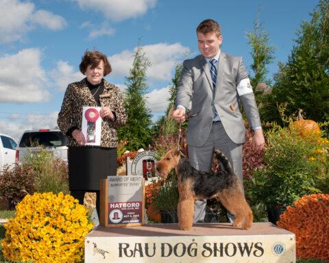 Award of Merit: Brynmawr Night Sprite.  Owner: Kathy McAtamney.  Breeders: Kathleen Rost & Jean H. Callens