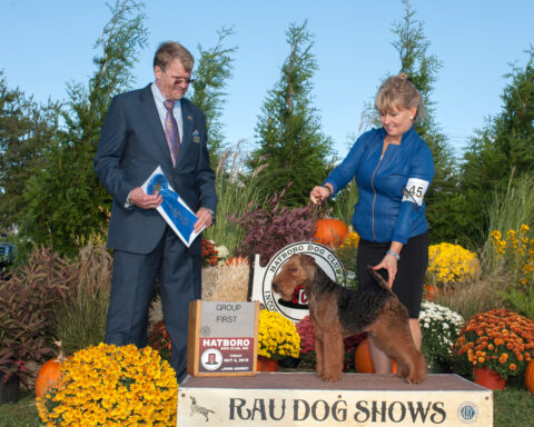 Best of Breed/ Group 1:  GCH Brightluck Money Talks.  Owners: Keith Bailey & Janet McBrien
